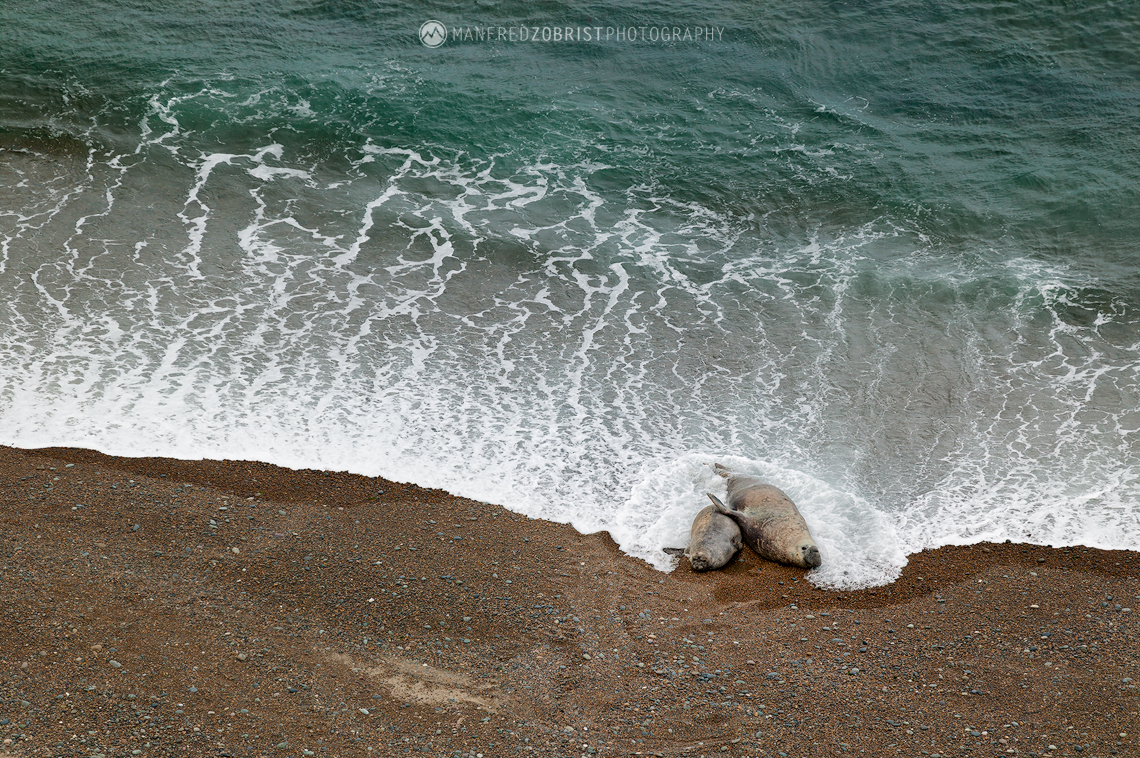 Elephant Seals Romance