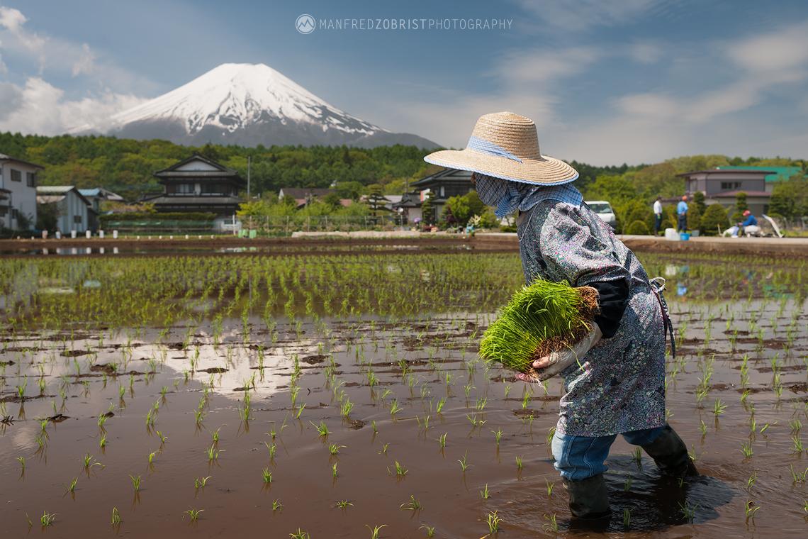 Yamanashi Rice Planter